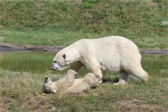 Parcul Ursilor Polari