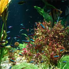 Aquarium - Casa Oceanelor